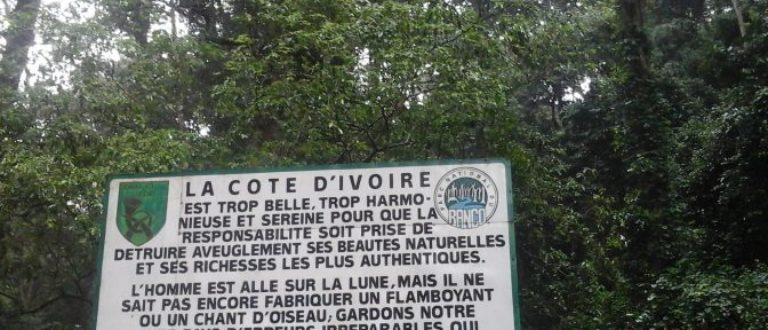 Article : Environnement : Rapprochons nous de la Forêt du Banco !